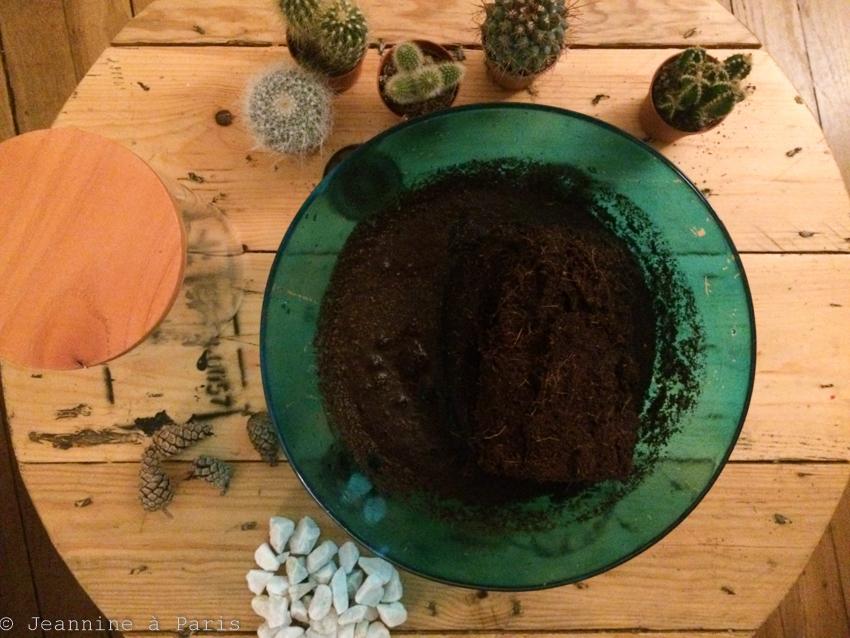 DIY-Terrarium-cactus-2