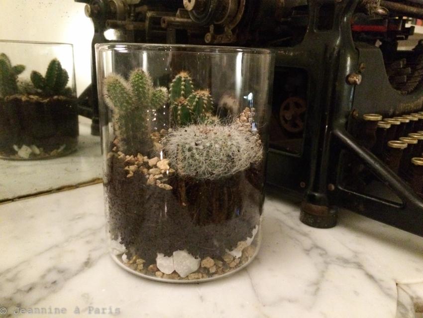 DIY-Terrarium-cactus-4