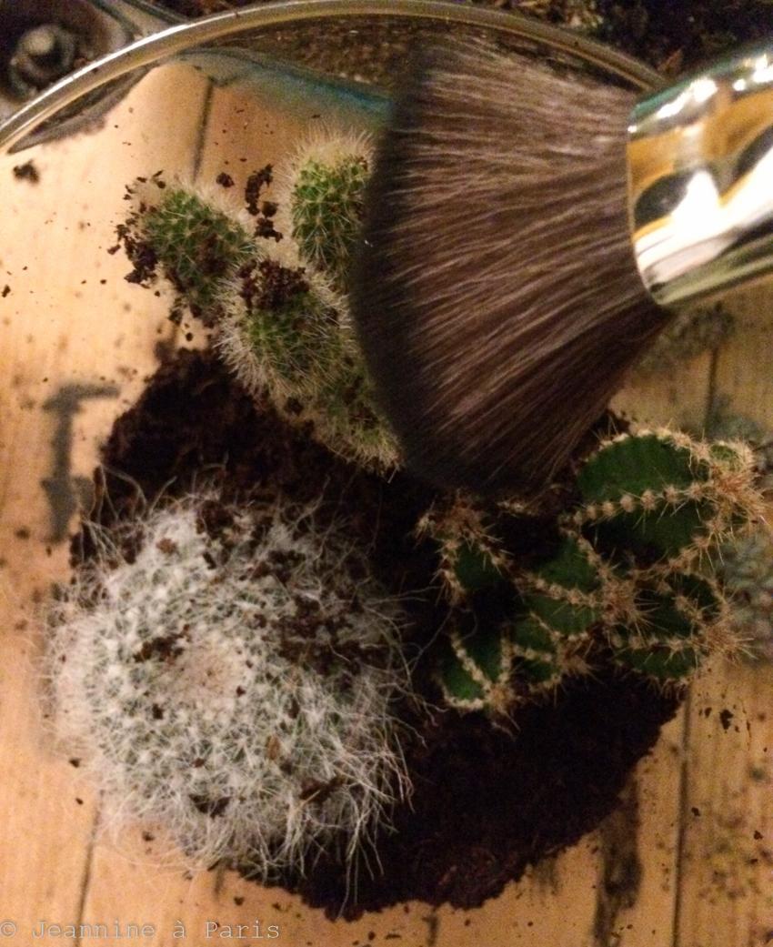 DIY-Terrarium-cactus-6